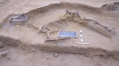 horse-skeleton-e1452766371958
